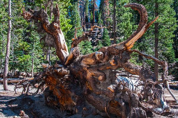 Eastern Sierra' Trip  2014