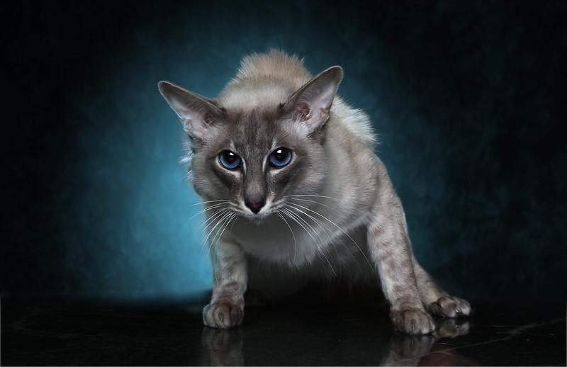 Saule-cat-10.jpg