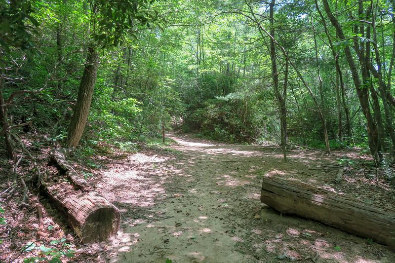 Buckhorn Gap-South Mills River Trail Junction -- 3,290'