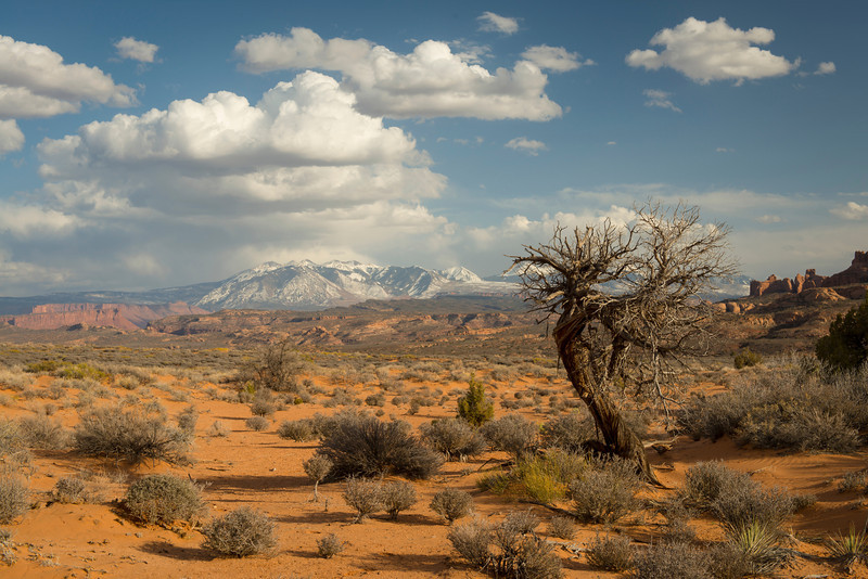La Sal Mountains, Arches National Park, Utah