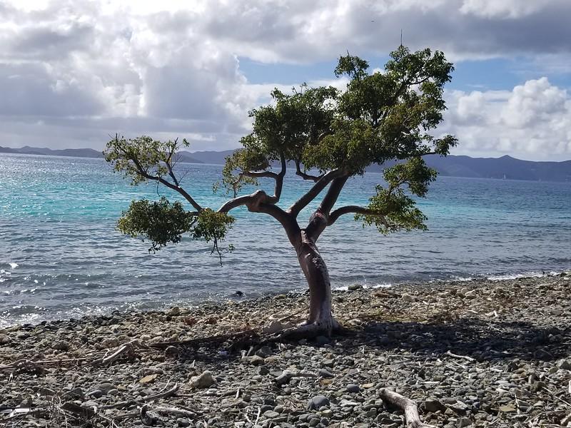 Tortola - Jost Van Dyke (22).jpg