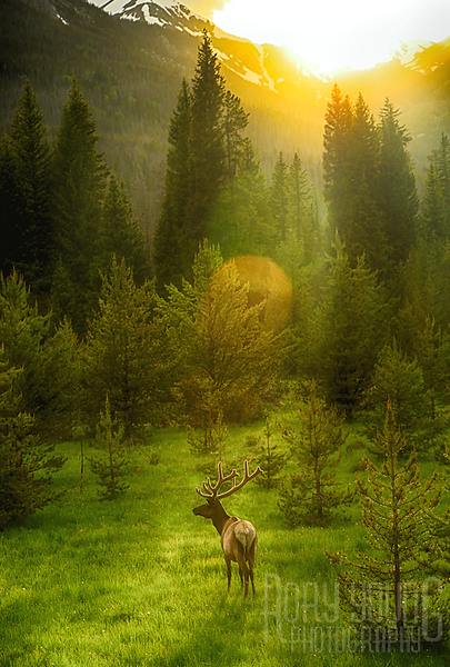 Elk-Sunset.png