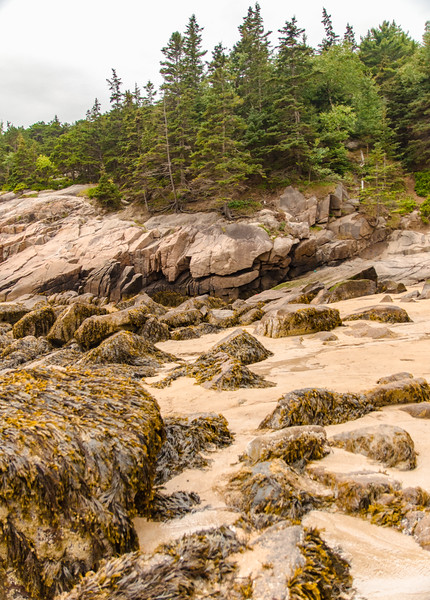 Acadia Nat'l Park-Terry's - July 2017-122-Edit.jpg