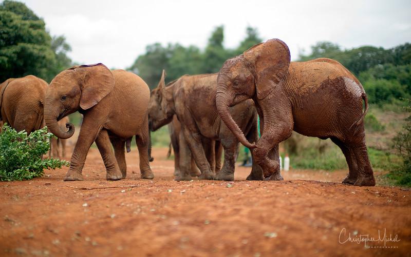 Aug312013_nairobi_blixen_elephant_m9_2847.jpg