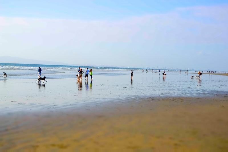 dogs_beach-10.jpg