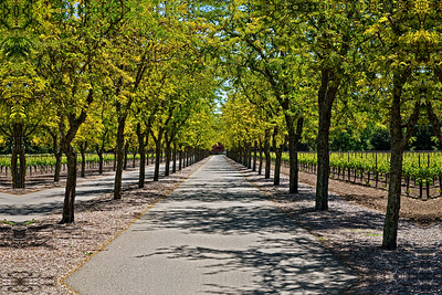 Wine and Wine Country