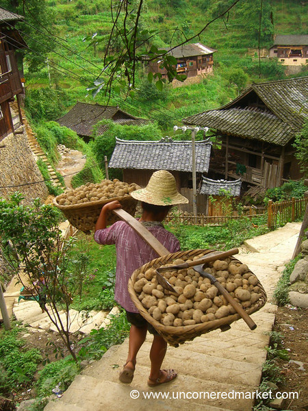 Carrying Potatoes Down Hill - Guizhou Province, China