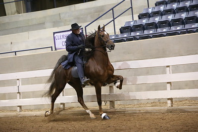 99. 5 Gaited Stake Open