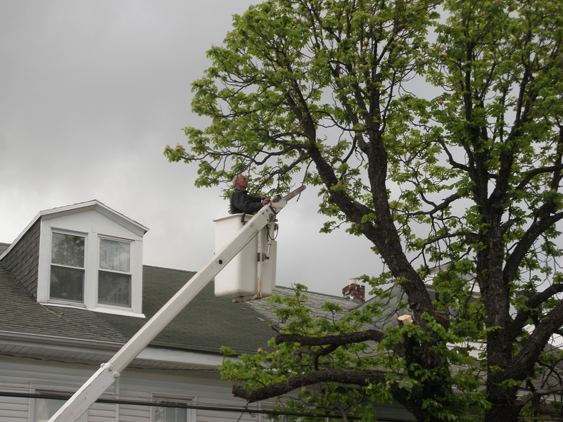 mahanoy city tree incident 5-8-2010 008.JPG