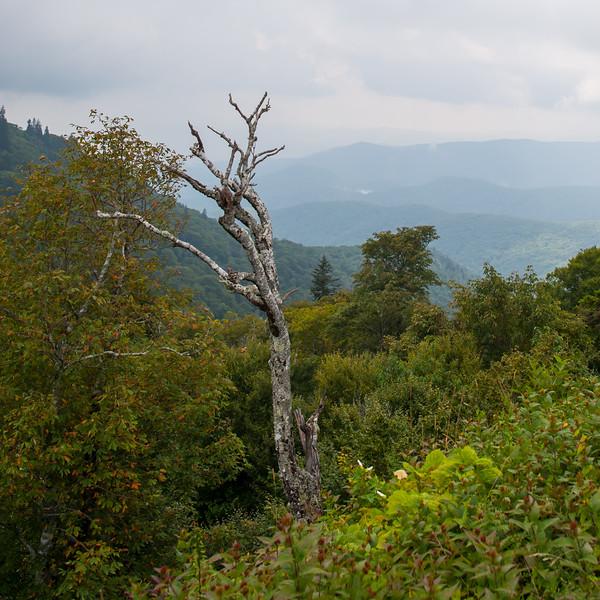 Big Smokey Stump