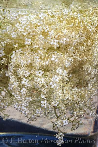elder flower + water + sugar + heat = cordial.