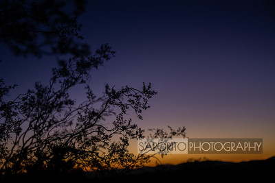 California - Joshua Tree and the Deserts