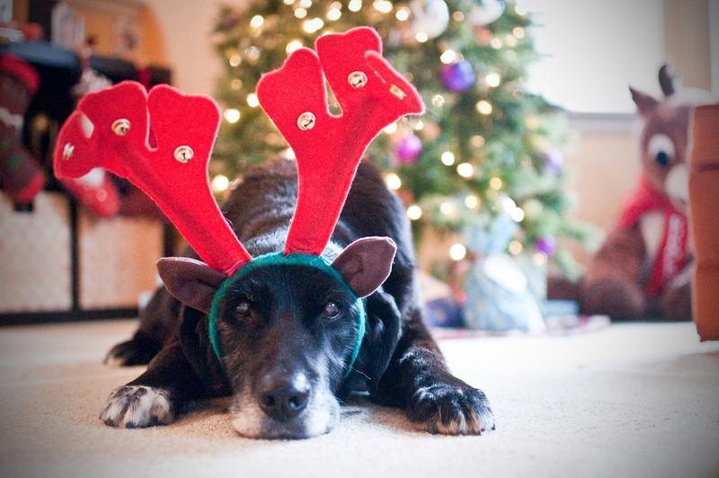 20121225-105642._DSC2445-christmas-malcolm.jpg