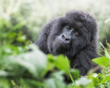 Rwanda 3/18
