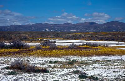 Carrizo Plain California, April 17, 2011