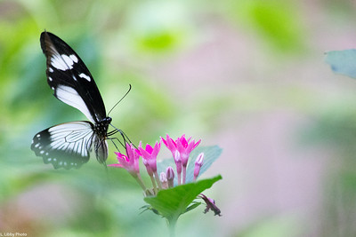 ButterflyPlace09.2018