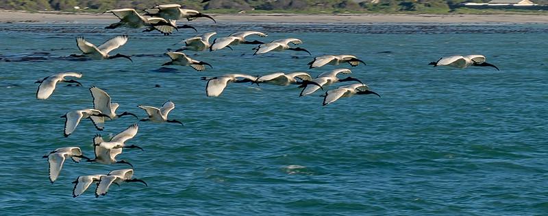 879 Cape Town__DSC7642.jpg