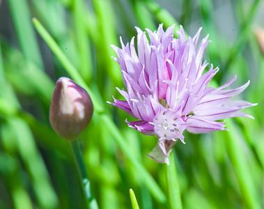 Flower Closeups
