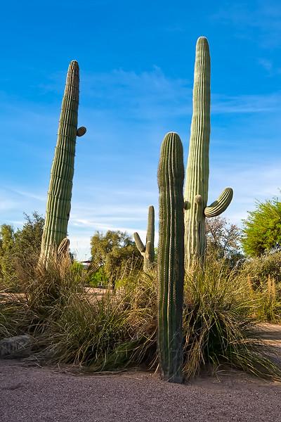 Phoenix/Tucson