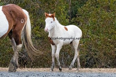 Late Fall Foal Roundup