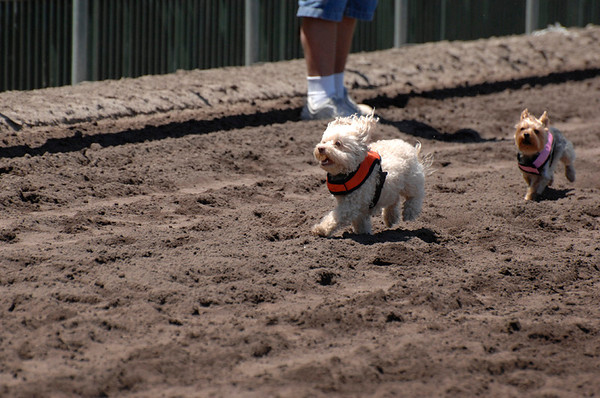 Derby Dog Dash July 9