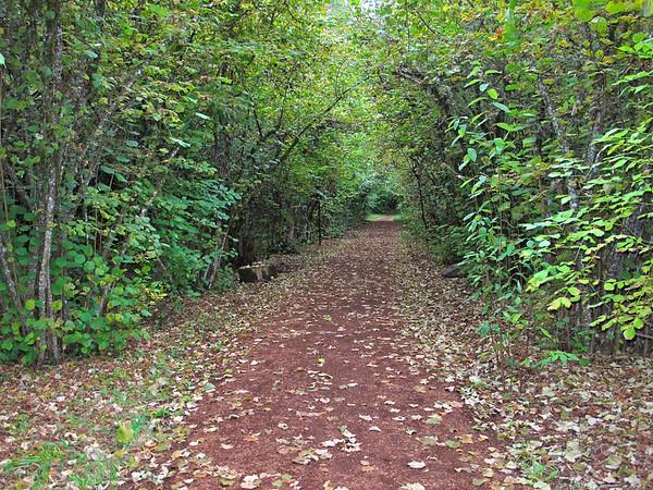 Alton Baker Park - Pre Trail, Eugene, Oregon, October 23, 2011