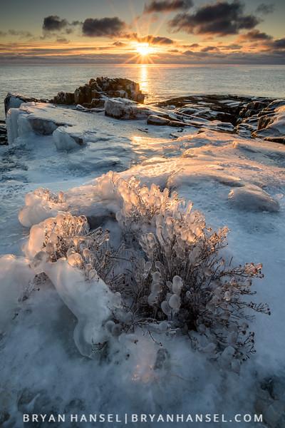 Ice Trees at Sunrise