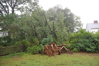 Stern Tree after Irene