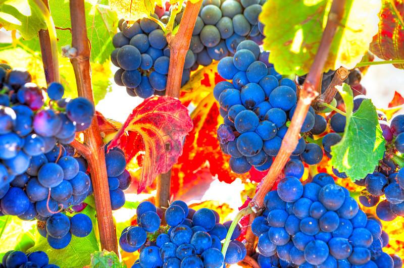 3044 Grapes