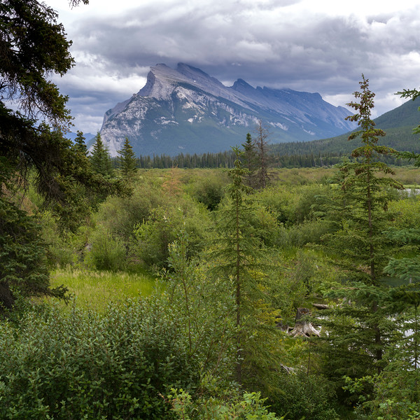 Forest with mountain in the background, Canadian Rockies, Canada