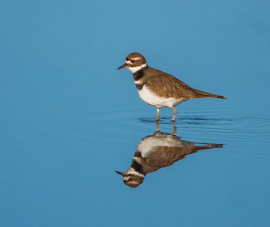 Orlando Wetlands Park, Christmas, FL
