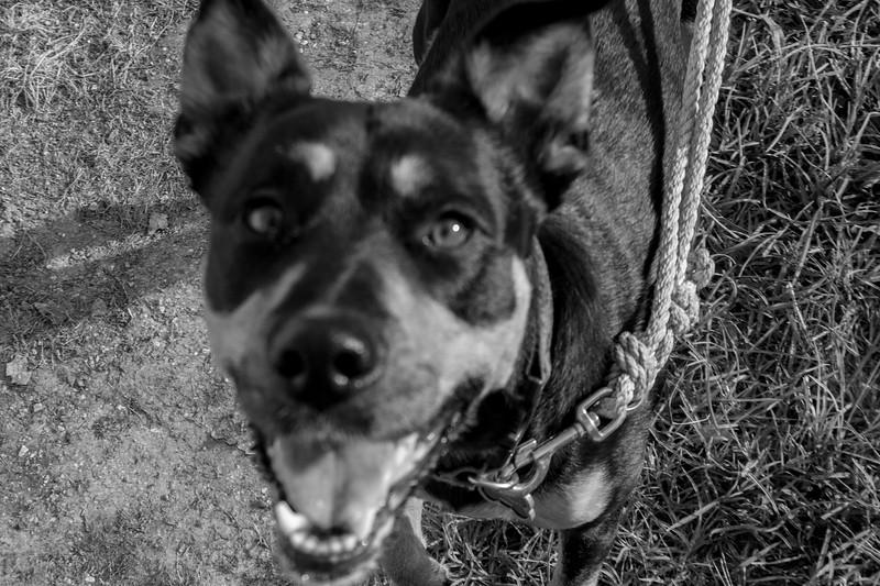 Stephanie Runion doggie-1.jpg