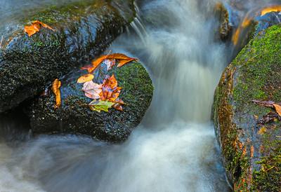 Maine in Autumn