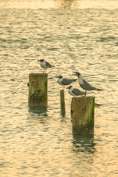Sea Gulls Lined Up Pier 19 Portrait Crop.jpg