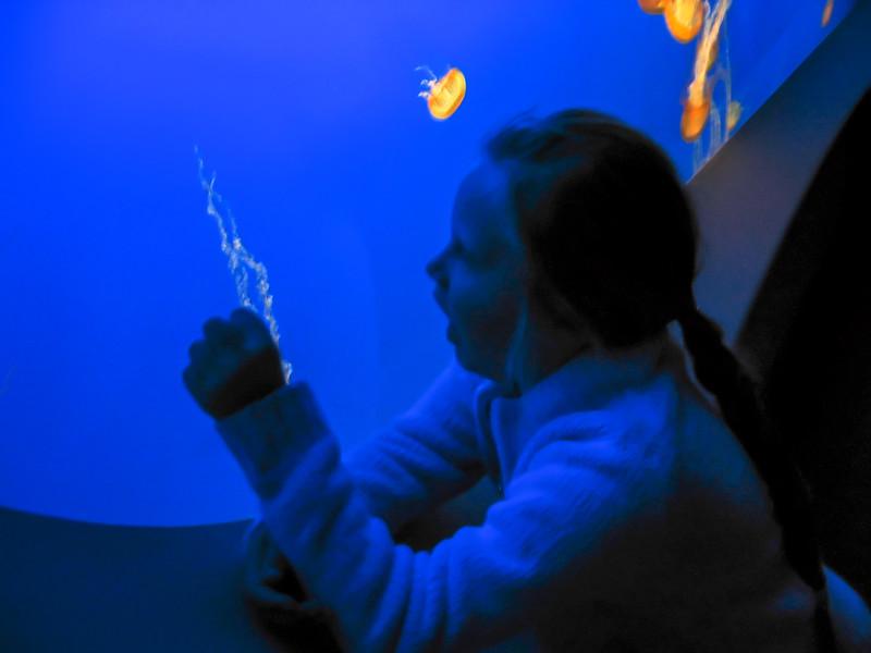 acquarium-1.jpg