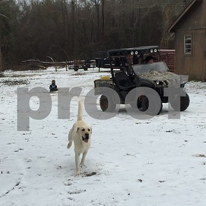 2/23/15 Snow Day In Tyler Area by Multiple Photographers