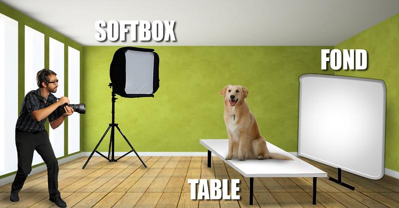 dog-setup2.jpg
