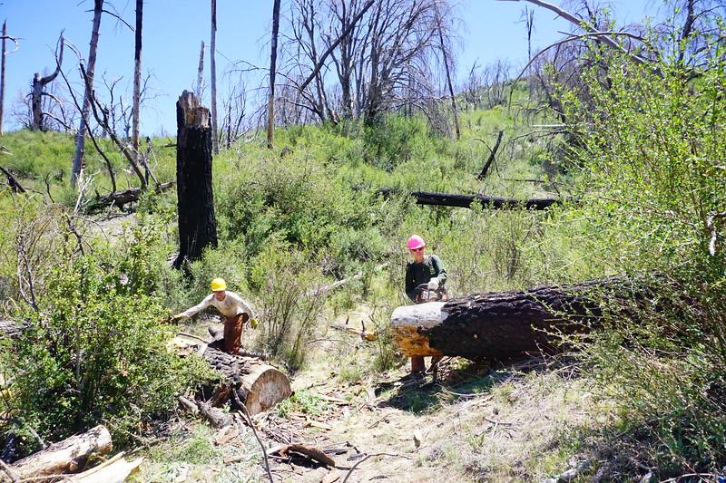 20170430013-Vetter Chainsaw Trailwork.JPG