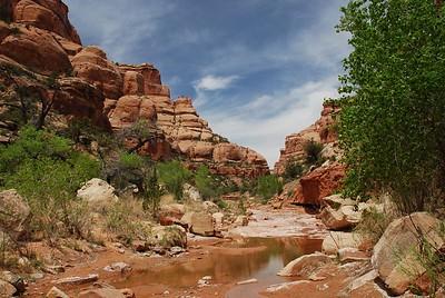 McCloyd Owl Fish Canyons 2009