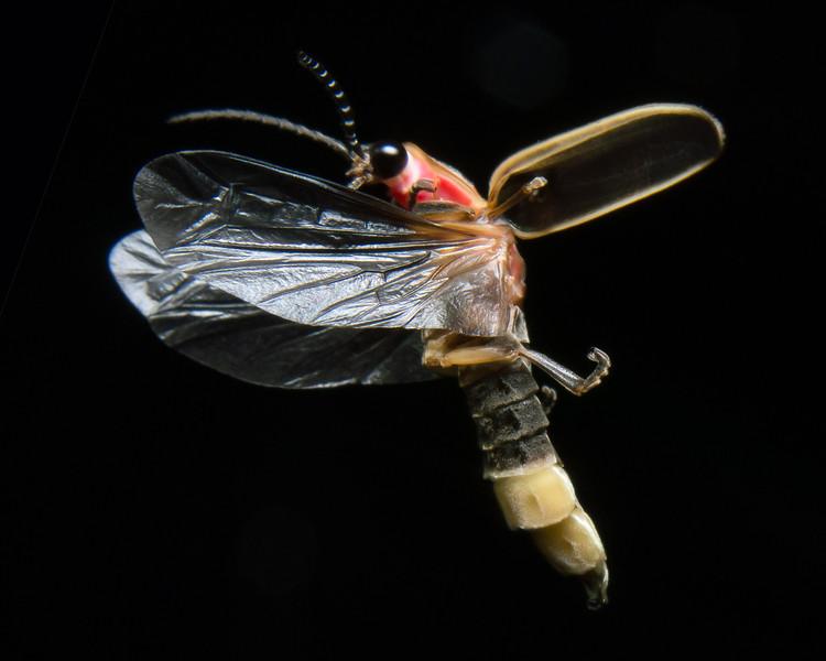 firefly_2013-07-06_166-1.jpg