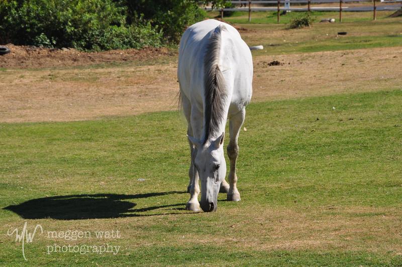 EB&Horses-059.jpg