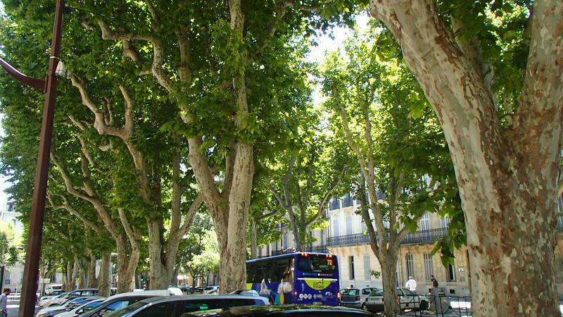 FranceTreesAix-en-ProvenceP7140537.jpg