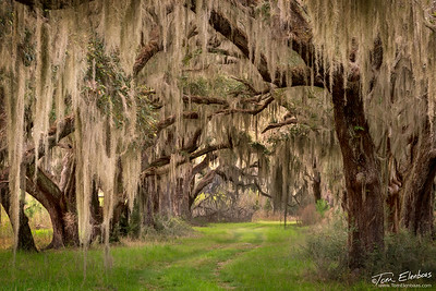 South Carolina Low Country