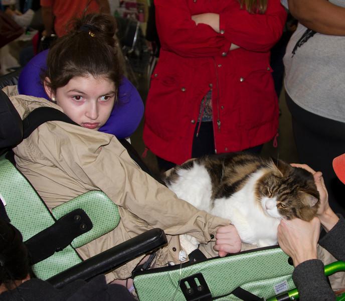 catshow jan2013010513_43.jpg