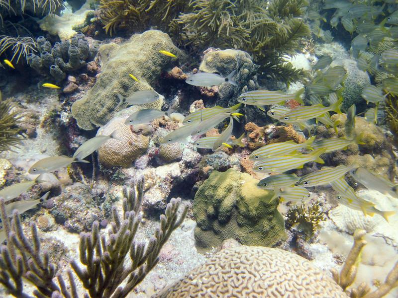 islamorada-diving-26.jpg