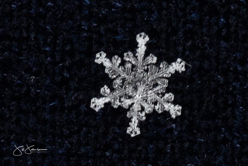 snowflakes-2409.jpg