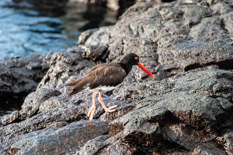 Galapagos-3370.jpg