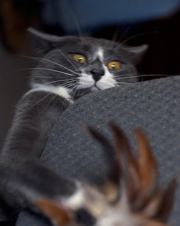 catattck-007.jpg