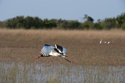 Botswana, July 2009