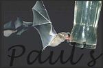Bat Pollinators